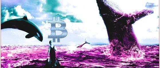 比特币巨鲸卖家数量在增加,那为什么BTC价格会飙升?